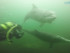 Delfine in Flensburg - Foto: Stephan Thomsen